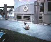 """Our cat Buff, a faithful companion on the water, acting as a welcoming committee of one for our second yacht. Domestic cats have a reputation for hating the water, but as long as he didn't actually end up in it (and the seas weren't too rough) Buff loved a good cruise. As long as his final destination wasn't the vet, travel was definitely his """"bag,"""" as they said in that day."""